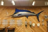 10 Ft. Blue Marlin Taxidermy